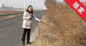 【视频】杂草挡住行人路 市民通行隐患多