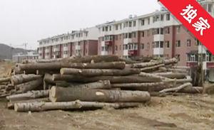 【视频】楼房附近装卸原木 影响居民正常休息