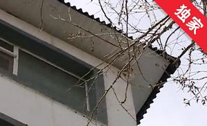 【视频】老树紧邻住宅楼 掉枝挡光隐患多