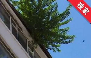【視頻】房頂長樹隱患多 居民希望盡快處理
