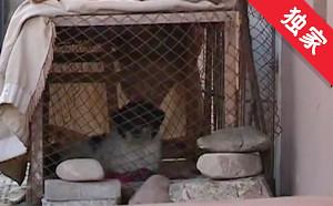 【視頻】小區里養狗 影響居民不應該
