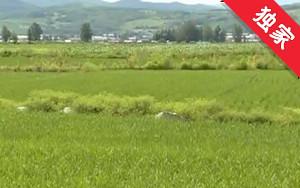 【视频】农业补贴款被挪用 索要十年无结果