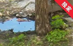 【视频】树下返水 气味难闻居民愁