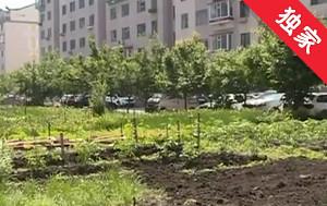 【視頻】公共用地被種菜 社區協調開展綠化工作