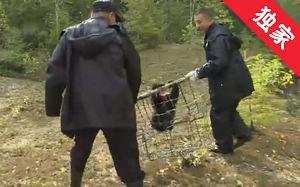 【视频】天桥岭森林公安局民警成功救助野生黑熊幼崽