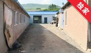 【视频】转租荒地建猪舍 村委会为啥要收费