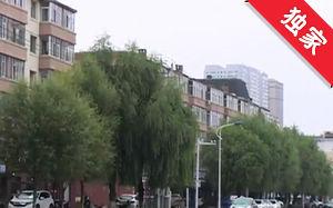 【视频】人行道柳树过高 遮挡阳光影响居民生活