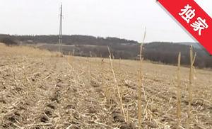 【视频】一块林地引发纠纷 私毁参地村民被罚