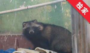 【視頻】狗獾突現居民樓 消防人員施救放生