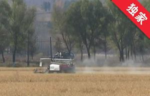【视频】发展水稻深加工 贫困村走出致富路