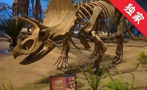 【視頻】延吉恐龍博物館成為熱門景點