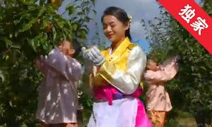 【視頻】走進延邊特產蘋果梨的采摘現場