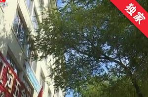 【視頻】路旁樹木太茂盛 居民家中采光受影響