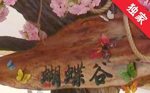 【视频】冬季蝴蝶舞翩翩拉开龙井冬季旅游序幕