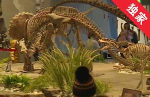 【视频】延吉冰雪旅游节期间恐龙博物馆免费开放