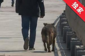 【視頻】規范養犬 拒絕不文明現象
