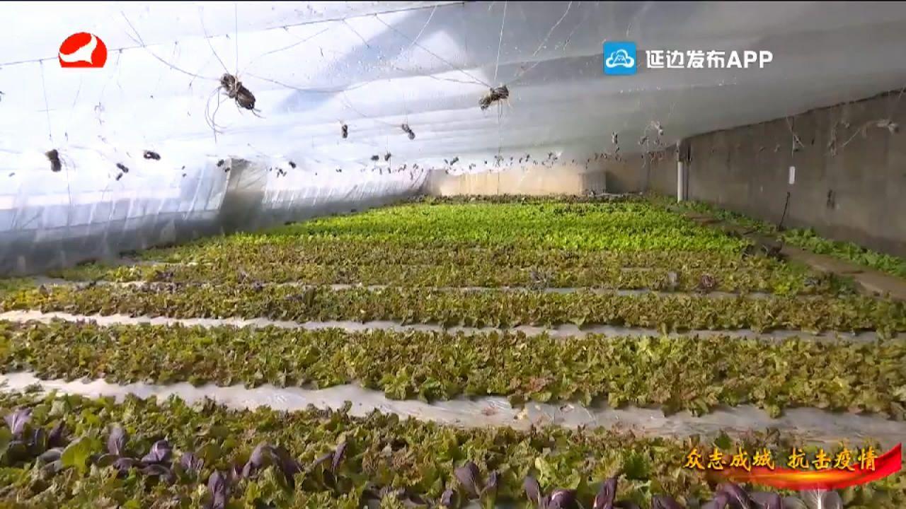 【视频】敦化:全力确保疫情防控期间的蔬菜供应