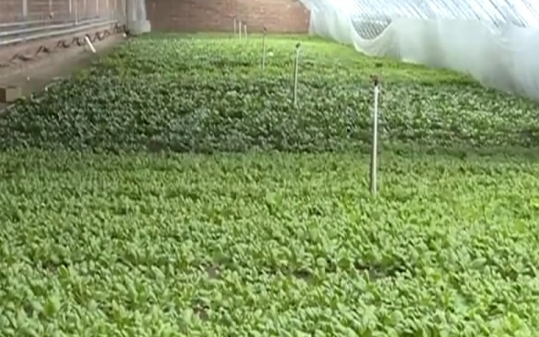 【视频】延吉市依兰镇全力保障疫情期间蔬菜生产