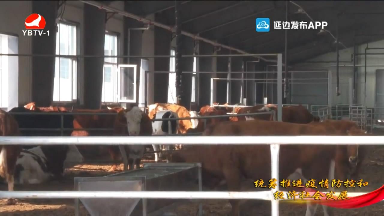 【视频】汪清县东西部产业援建季节性生产项目全部复博猫游戏平台注册登录开户【博猫游戏网站】