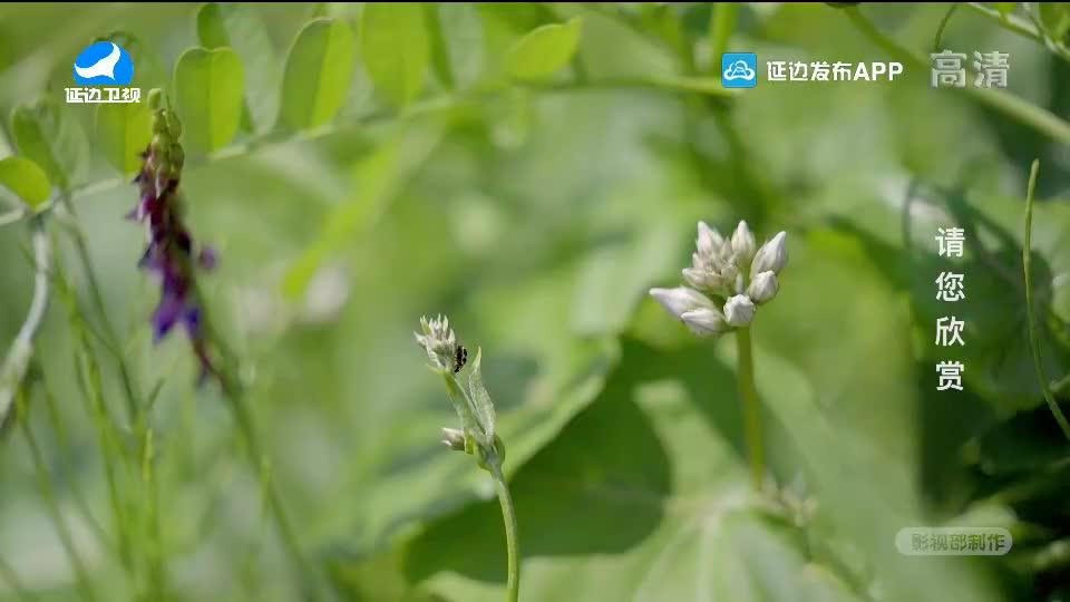 生活广角 2020-07-01