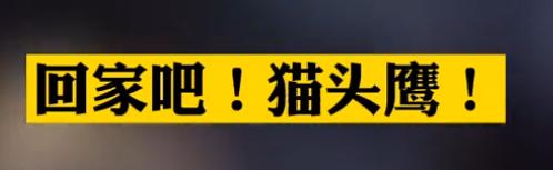 【微視頻】回家吧!貓頭鷹!