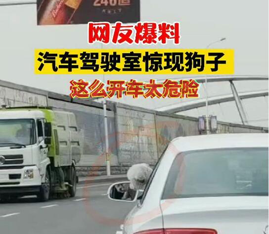 【網友爆料】汽車駕駛室驚現狗子  這么開車太危險!