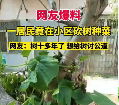 【網友爆料】一居民為了種菜砍掉小區十多年的樹。太心疼,想為樹討個公道!