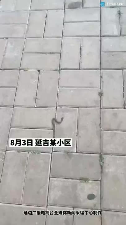 【網友爆料】延吉一小區驚現一條蛇!提醒大家一定要小心!