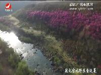 【航拍视频】敦化官地野生金达莱