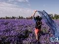 伊犁·国际旅游谷第七届薰衣草国际旅游节开幕