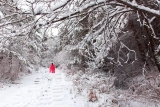 春雪又润安图二龙山 瞬间美呆了
