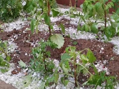 昨晚,延吉冰雹造成多少损失?
