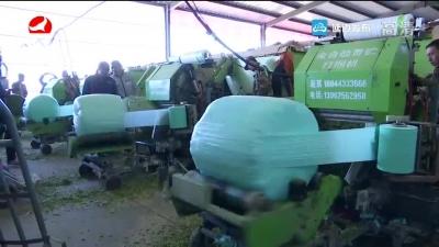 全州青贮玉米调制现场培训会在敦化举行
