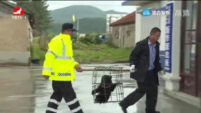 天桥岭森林公安局民警成功救助野生黑熊幼崽
