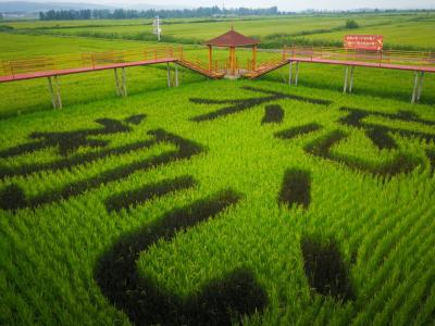 高质珍品 多元创新 延边大米打造农业供给侧改革鲜活样本