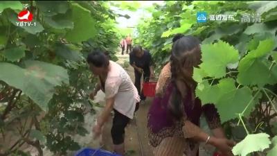 珲春市英安镇双新村积极推进生态休闲农业发展