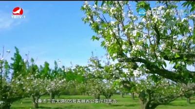 龙井城市形象宣传片登陆央视