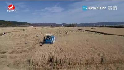 农业部门提醒:秋收季节 广大农户要关注天气