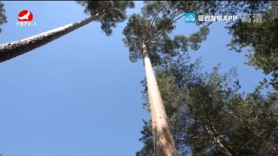 我州2万余株古树名木受保护 最老树龄3000岁