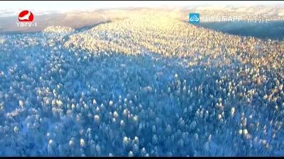 数十公里雾凇扮靓雪岭景区