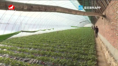 生物有机肥助农增产增收