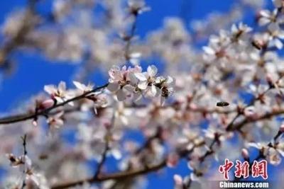 今日立春 | 战胜疫情,拥抱希望