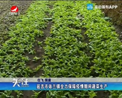 延吉市依兰镇全力保障疫情期间蔬菜生产