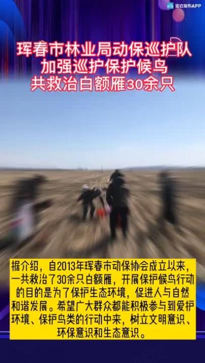【微视频】珲春市林业局动保巡护队加强巡护保护候鸟 共救治白额雁30余只