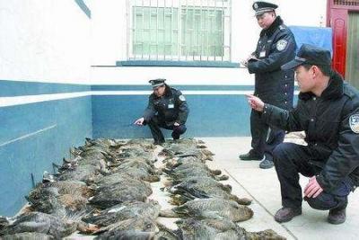 延边开展专项行动打击非法捕杀贩卖食用野生动物行为