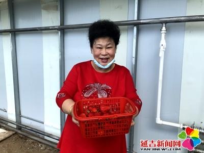 大棚草莓飘香 市民快乐采摘 农户干劲十足