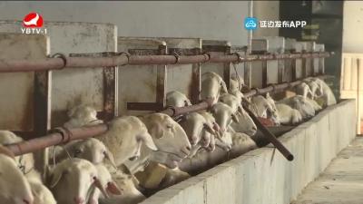尹辉宽:发展种羊养殖业 带领村民共同致富