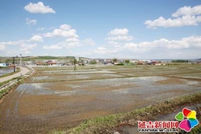延吉朝阳川镇:水稻插秧正当时