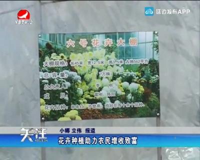 花卉種植助力農民增收致富