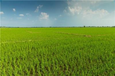 我省克服疫情影響推進春耕 今年預計糧食種植面積超過8500萬畝
